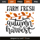 Farm fresh autumn harvest