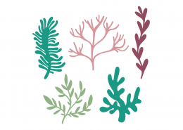 Under The Sea Plants SVG Cut File 9499