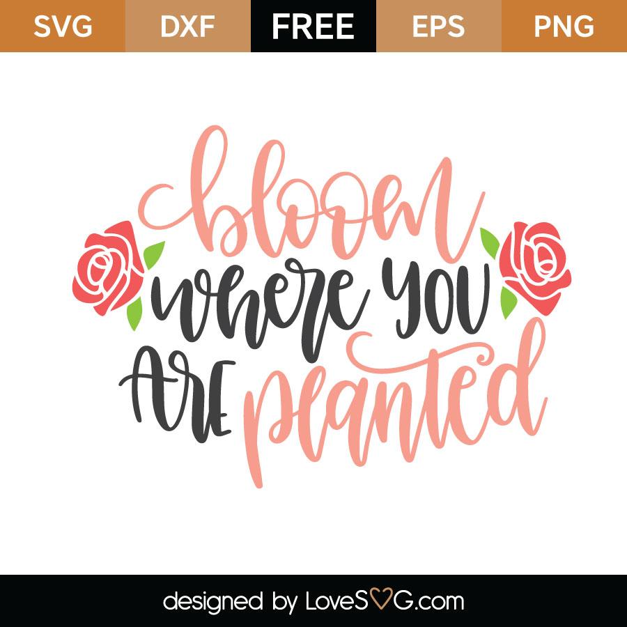 Bloom Where You Are Planted Lovesvg Com